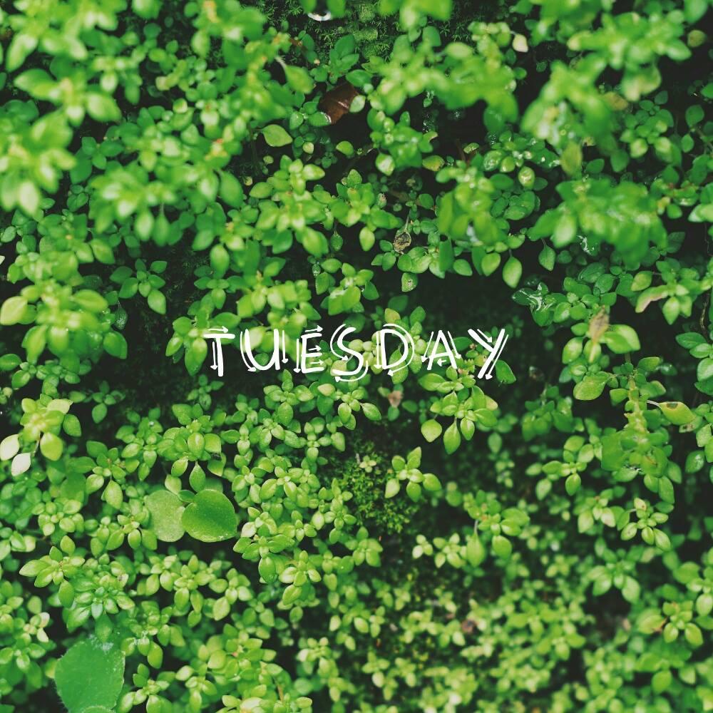 Tuesday by Nico Wijaya